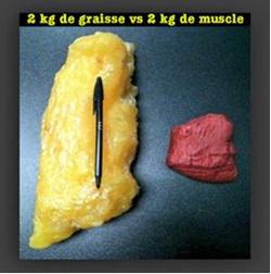 Que devient la graisse perdue lors d'un régime ? Conseil